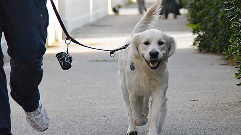 Deiezioni Canine: La 'stretta' Dell'Amministrazione Comunale