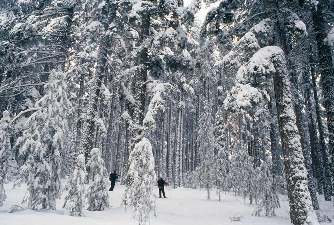 Fermandosi Accanto A Un Bosco In Una Sera Di Neve