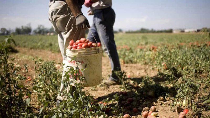 Sfruttamento Lavoratori Agricoli E PNRR, Serve Una Mappatura Comunale: Non C'è Inclusione Senza Sinergia Istituzionale